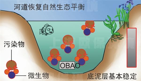 下列生物的形态结构特征与防止水分丢失无关的是( )a.